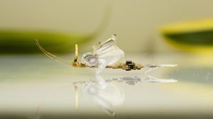 Crushable robot insect sneers at fly swatters and shoes