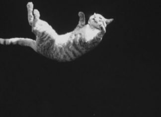 The surprisingly complicated physics of why cats always land on their feet