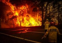 Climate change had a big year, from Greta Thunberg to Australia's fires