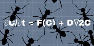 Clustering pattern of Azteca ant colonies may be due to a Turing mechanism