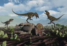 Horse-size T. rex probably not real, says dream-crushing study
