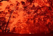 Australian fires: Everything we know and how you can help
