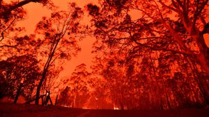 Australian fires: Everything we know about the crisis and how you can help
