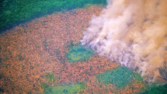 Wildfires could flip parts of the Amazon from a carbon sponge to a source by 2050