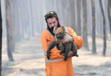 Australian fires have incinerated the habitats of up to 100 threatened species
