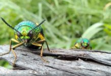 Sparkly exoskeletons may help camouflage beetles from predators