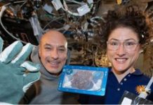 Chocolate chip cookies baked in space took two hours to make