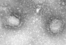 How the new coronavirus stacks up against SARS and MERS