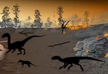'Firewalker' dinosaurs survived in a 'land of fire'