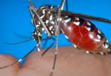 We've figured out how mosquitos sense our warmth