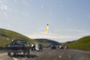 Car splatter tests show major decline in insect abundance, study says