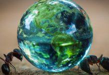 Divided, we fall: How ant behavior mimics political polarization
