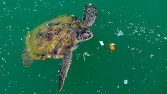 Sea turtles may confuse the smell of ocean plastic with food