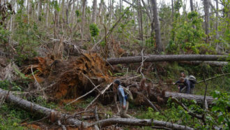 How Hurricane Maria's heavy rains devastated Puerto Rico's forests