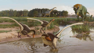 Fossils of a new dromaeosaur date to the end of the Age of Dinosaurs