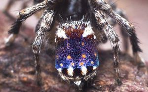 Tiny newly discovered spider looks like Vincent van Gogh's Starry Night