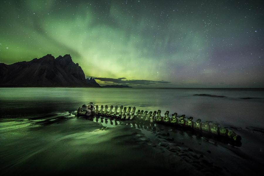 Why The Northern Lights Make Whales Go Blind And Get Lost
