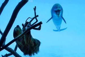 Aquarium coronavirus lockdown gives dolphins chance to meet a sloth