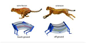Scientists create a super speedy soft robot based on the cheetah