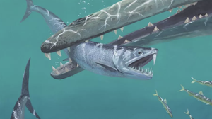 Saber-toothed anchovies surface in ancient fossils