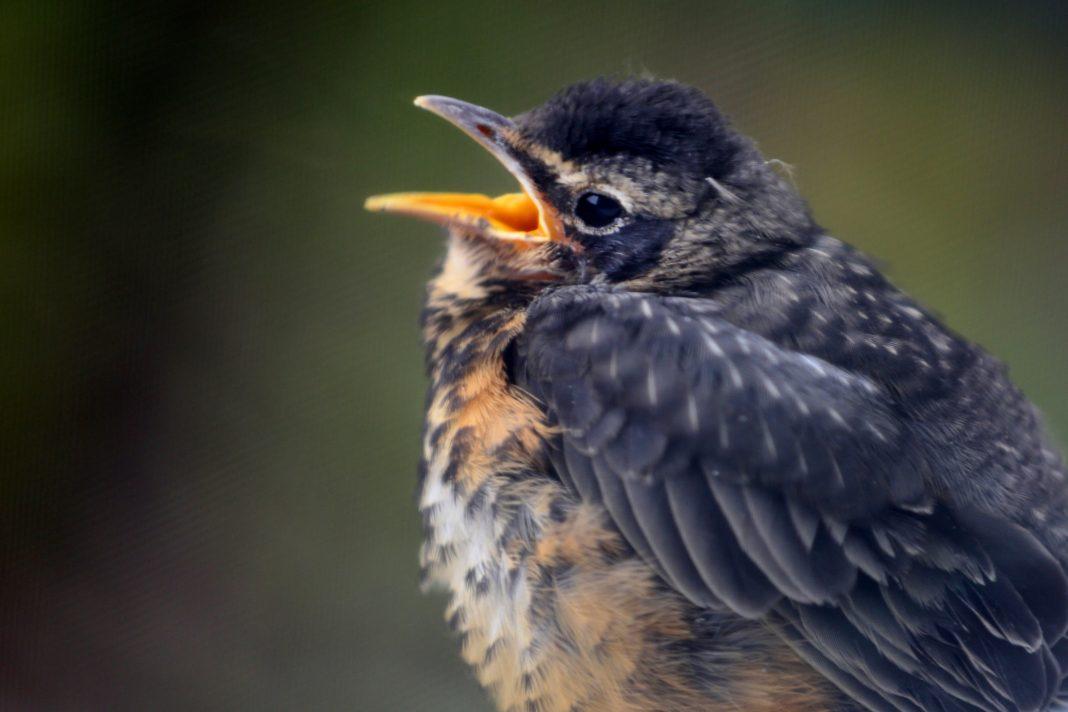 Opening The Outdoors: Inaugural Black Birders Week