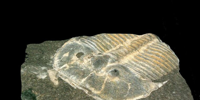 Fabulous fossil preserves eyes of 429-million-year-old trilobite