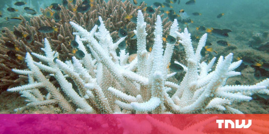 Coral sex: How lab reproduction could restore wild reefs