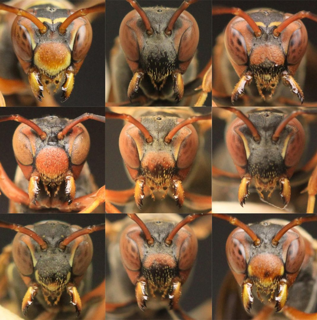 Facial Recognition Development In Wasps Hints At A Mystery Of Human Evolution
