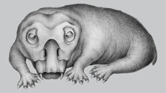 Ancient Lystrosaurus tusks may show the oldest signs of a hibernation-like state