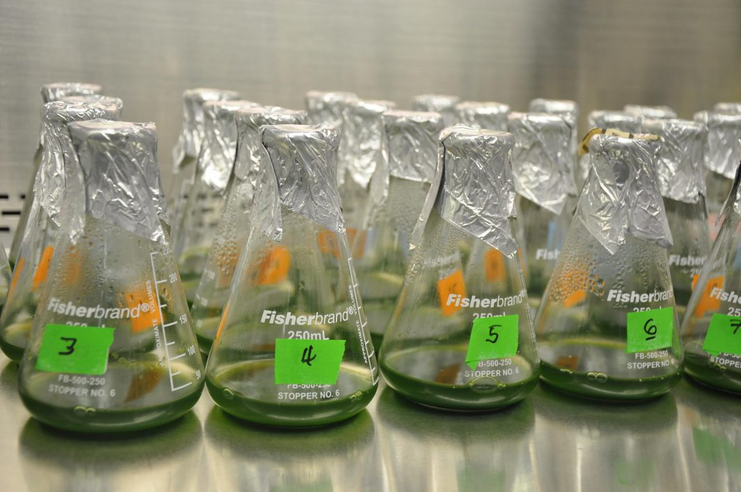 Researchers Working To Grow Algae For Biofuels In The Dark Using Solar Energy