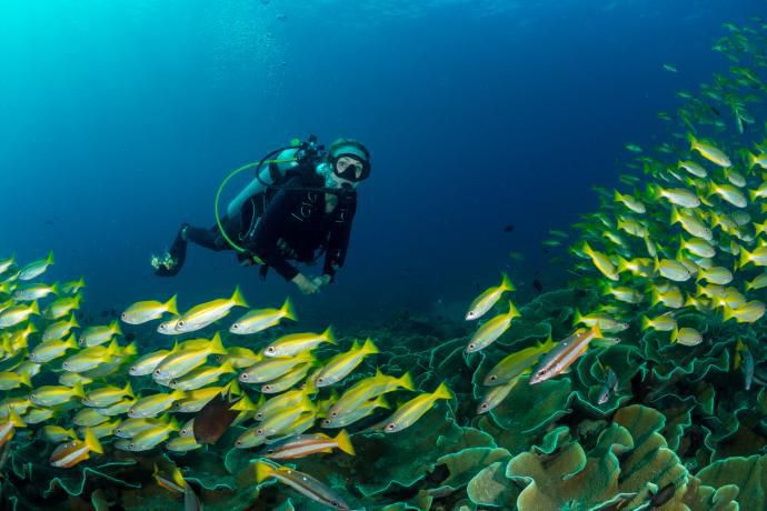 Alexandra Cousteau Wants To Restore The Oceans By 2050