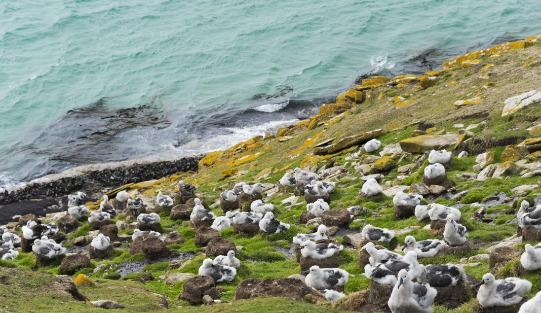 Bird Poop Is Responsible For The Falkland Islands' Iconic Grasslands
