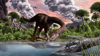 How massive long-necked dinosaurs rose to rule the Jurassic herbivores