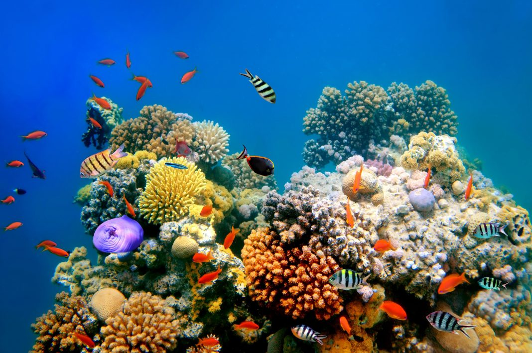Coral Reefs Worry About Getting Enough Iron, Too