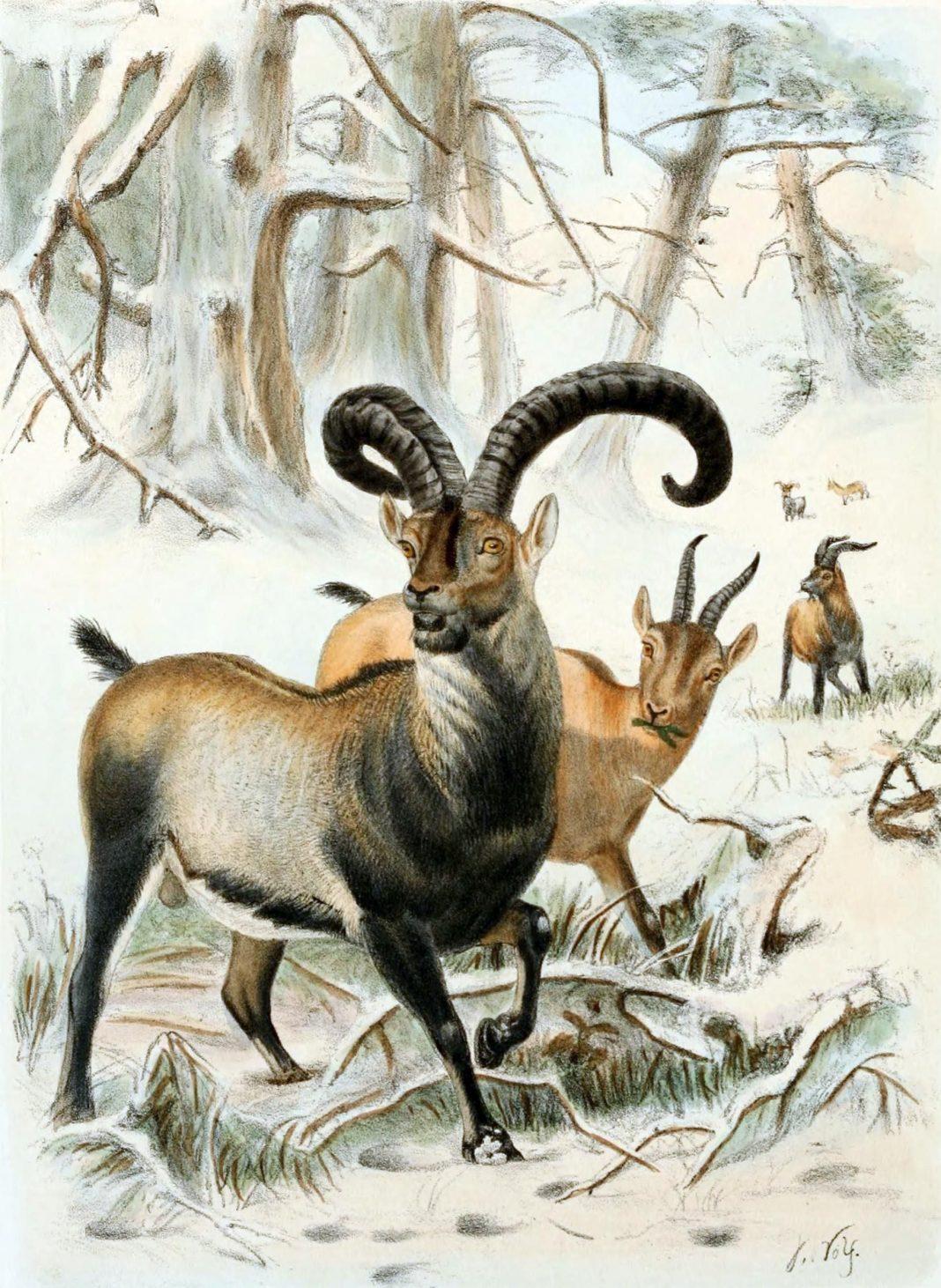 The Species That Went Extinct Twice