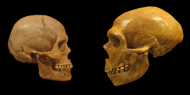 What happens when you replace a human gene with its Neanderthal version?