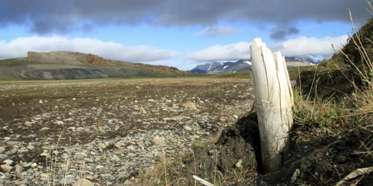 Million-year-old mammoth DNA rewrites animal's evolutionary tree