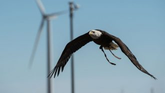 How researchers can keep birds safe as U.S. wind farms expand