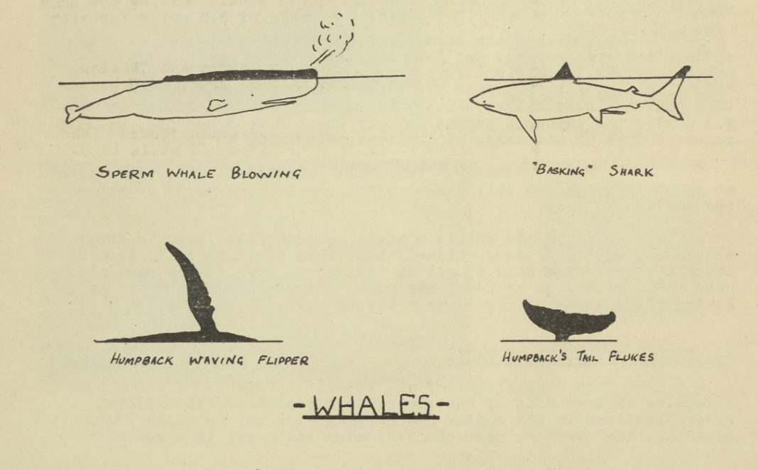 'U-Boat Or Whale?' Secret WWII Report Explains The Difference