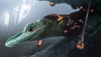 An ancient creature thought to be a teeny dinosaur turns out to be a lizard
